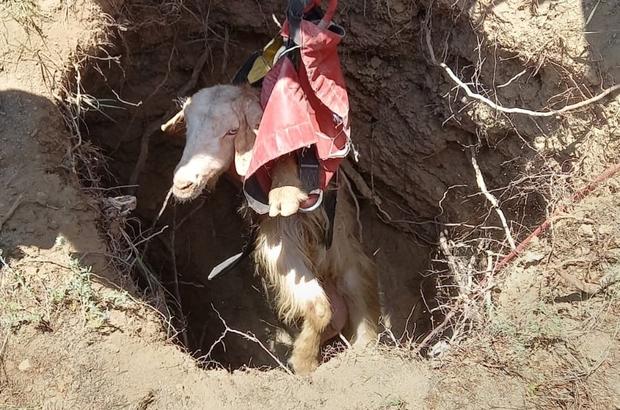 Kuyuya düşen 4 keçi AFAD tarafından kurtarıldı Sivas'ta kuyuya düşen 4 keçi AFAD ekipleri tarafından kurtarıldı
