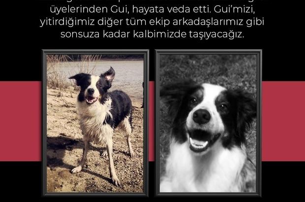 AKUT'un emektar arama köpeği Gui hayatını kaybetti Gui'nin kaybı AKUT ekiplerini üzüntüye boğdu