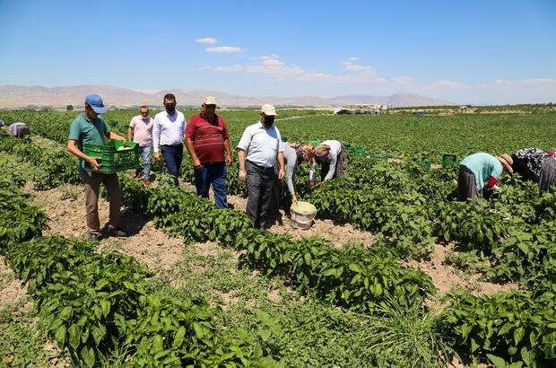 """Esenlik genel müdürü Ünlü'den çiftçilere destek açıklaması """"Bizim buradaki en büyük hedefimiz çiftçimize faydalı olmak"""""""
