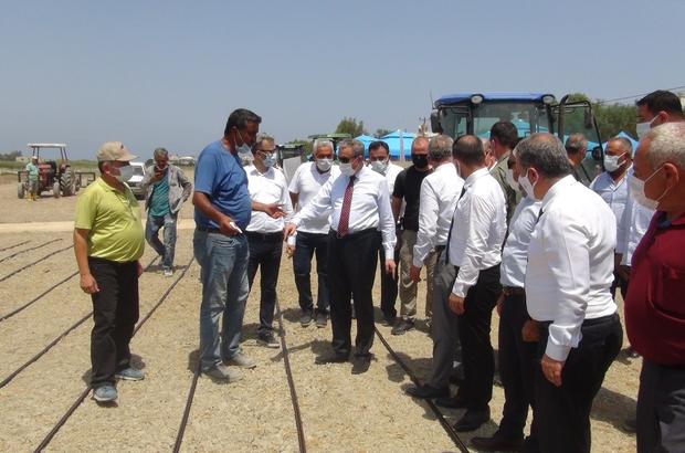 """Mersin'de damla sulamayla çeltik üretiliyor Vali Su: """"605 dönüm arazide damlama sulamalı çeltik üretimi gerçekleştireceğiz"""""""