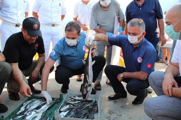 """3 yıl sürecek projeyle, 16.5 milyon anaç balon balığı yakalanacak """"Balon Balığı Avcılığının Desteklenmesi, Aslan Balığının Tüketime Kazandırılması"""" projesi kapsamında Antalya'da alımlar başladı Tarım ve Orman Bakanlığı Balıkçılık ve Su Ürünleri Genel Müdürü Mustafa Altuğ Atalay: """"Proje çerçevesinde denizlerden 16.5 milyonun üzerinde anaç balon balığı çekilecek"""" """"Bu sene için 5 milyonluk bütçe ayırdık, önümüzdeki seneler için de 5'er milyon olarak devam edecek"""" """"Balon balığını alıyoruz, sanayide kullanıyoruz, imha ediyoruz. Aslan balığını ise dikenlerini kestikten sonra tüketebiliyoruz"""""""