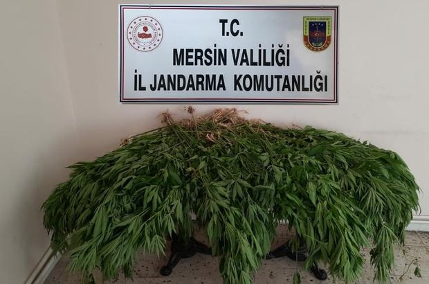 Mersin'de uyuşturucu operasyonu Gözaltına alınan 8 kişiden 4'ü tutuklandı