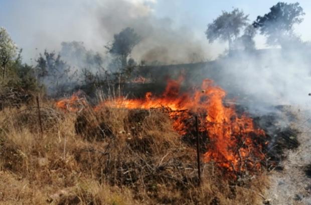 Milas'ta otluk yangını