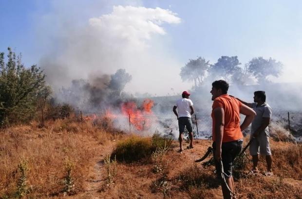 Milas'taki yangın kontrol altına alındı 12 hektar tarım arazisi zarar gördü