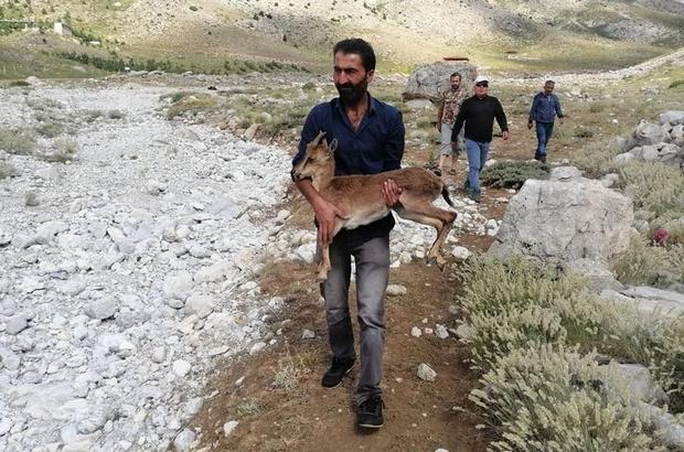 Piknikçilerin bulduğu yavru yaban keçisine şefkat eli uzandı