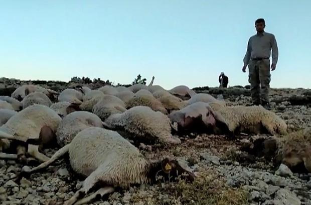 Kahramanmaraş'ta yıldırım düştü 86 koyun telef oldu