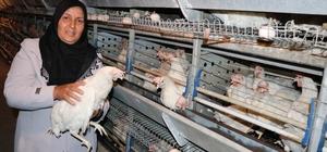 """Tavukları telef olan girişimci kadın yeni tavuklarına kavuştu Tarım ve Orman Bakanlığı tarafından gönderilen 5 bin adet tavuk, kadın girişimciye teslim edildi Tavukları teslim alan Sevim Demir: """"Devletimizden Allah razı olsun, Cumhurbaşkanımıza teşekkür ederim"""""""
