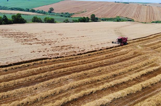 (Özel) Doğuda kuraklık, Trakya'da görülmemiş bolluk Buğday hasadı için biçerdöverler tarlalara giriş yaptı Dekar başına 700-800 kilogram ürün elde ediliyor