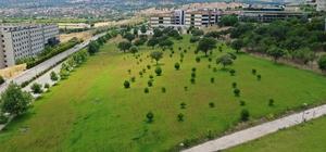 Manisa Celal Bayar Üniversitesi (MCBÜ) daha yeşil bir kampüs için çalışıyor