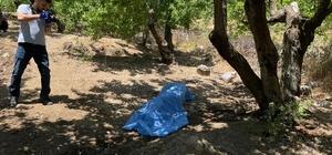 Hatay'da bahçesine kayısı toplamaya giden yaşlı adam ölü bulundu