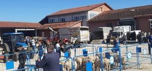 Zabıtadan hayvan pazarında kurban satış denetimi