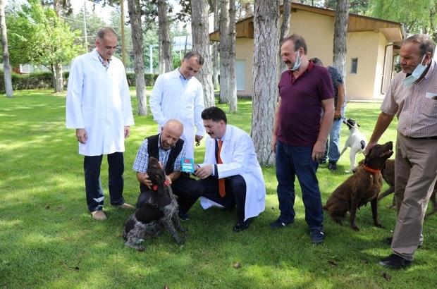 Can dostların da artık bir kimliği var İlk aşamada 649 köpeğin kuduz aşıları ve çip uygulamaları yapıldı