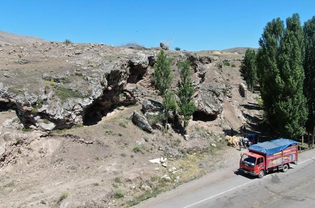 Mağarada organik yetiştiler, kurban olmak için yola çıktılar Sivas'ta ağıllarda yetiştirilen hayvanların aksine mağarada organik olarak yetiştirilen küçükbaş hayvanlar kurban pazarında yerini almak için yola çıktı