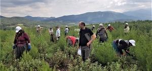 Orman Bölge Müdürlüğünün seyreltme çalışmaları