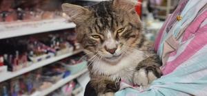 Mahallenin maskotu kedi iyileşerek sağlığına kavuştu
