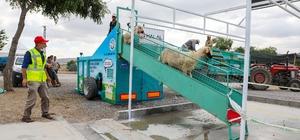 Talas Belediyesi kurbanlık koyunları yıkayıp dezenfekte etti