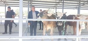 Başkan Arif Teke: ''Canlı hayvan pazarı ekonomiye can veriyor''