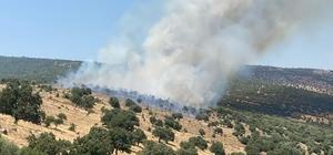 Manisa'da makilik alanda yangın