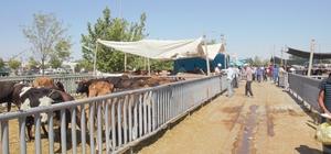 Konya'da Kurban Bayramı arifesinde pazarlarda sakinlik