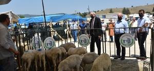 Başkan Bakkalcıoğlu canlı hayvan pazarını ziyaret etti