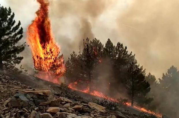 Elazığ'da orman yangını: Çok sayıda ekip sevk edildi