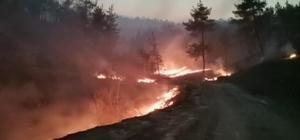 Kahramanmaraş'taki orman yangınında 25 hektar alan yandı Kahramanmaraş'ta orman yangını saatler sonra kontrol altına alınabildi