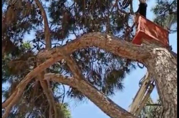 İtfaiye ekipleri leyleği kurtarıp su içirerek doğaya bıraktı Adana'da ağaçtaki ipe ayağı takılıp mahsur kalan leyleği itfaiye ekibi kurtarıp su verdikten sonra doğaya bıraktı