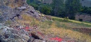 Sıcaktan bunalan tilki ailesi yuvalarının önünde görüntülendi