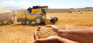 Talas'ta boş araziler tarıma kazandırılıyor Bu yıl 38 ton buğday hasadı yapıldı
