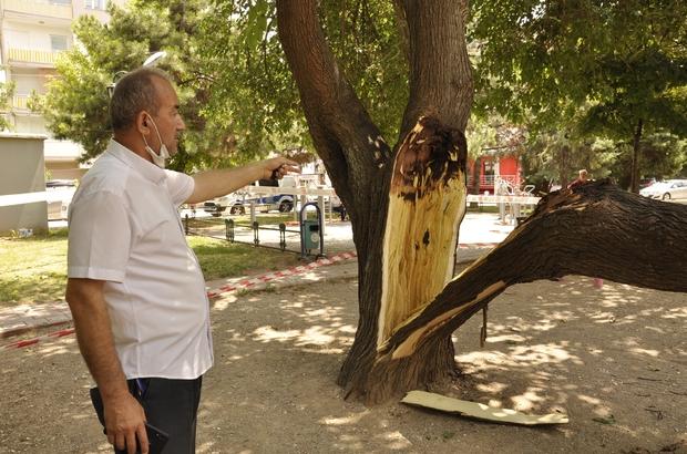Çocuk parkında ağaç devrildi, şans eseri can kaybı ya da yaralanan olmadı Ortadan ikiye bölünen ağaç çevreye zarar verdi Üzerine ağaç devrilen minibüste maddi hasar meydana geldi