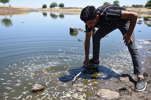 Asırlardır balıkların yaşadığı çayda korkutan görüntüler Balık ölümleri mahalle sakinlerini tedirgin ediyor