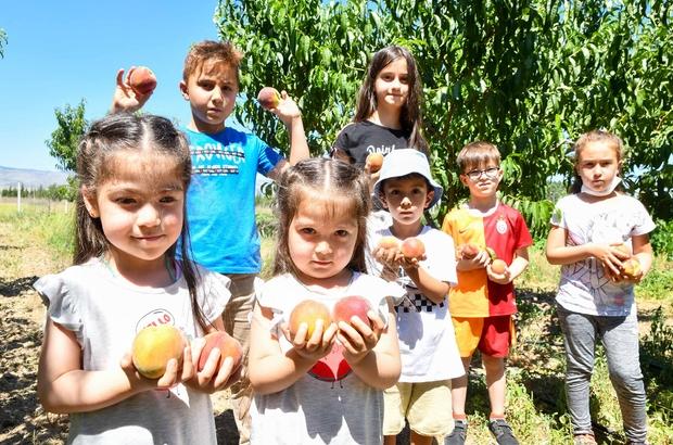 Meyveler çocukların emeği ile olgunlaşıyor