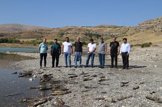 Kahta Çayı'nda binlerce balık telef oluyor