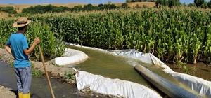"""""""Burada ürün alamazsın"""" söylemlerine kulak asmadı, 30 yıldır ekim yapılmayan alana silajlık mısır ekti Bingöl'de yaşayan 29 yaşındaki Ömer Katkay, 30 yıldır ekim yapılmayan araziye mısır ekti Yüzde 50 destekli tohumu 100 dönümlük tarlaya eken Katkay, hasat döneminde 200 bin lira kazanç elde etmeyi amaçlıyor"""