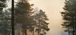 Kayseri'de orman yangını Kısa sürede büyüyen yangını kontrol altına almak için ekiplerin çalışması sürüyor