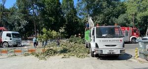 Devrilen ağaçtan saniyelerle kurtuldular Çürüyen ağaç rüzgara dayanamadı Yola düşen ağaç sebebi ile trafik durdu