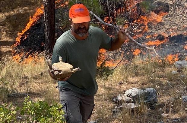 Mersin'in 2 ilçesindeki yangınlar sürüyor Mersin'in Silifke ve Aydıncık ilçelerinde çıkan orman yangınları sürerken, yangınlara karadan ve havadan müdahale ediliyor