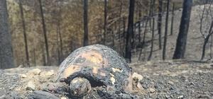 Yangından geriye kalan acı manzara Kozan'da çıkan orman yangınında yanan hayvanlar yürekleri dağladı