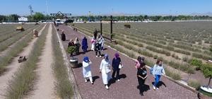 Belediye başkanlarının eşleri Karatay lavanta bahçesini gezdi