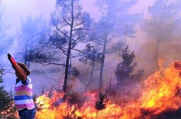 Menteşe'de orman yangını