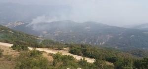 Tunceli'deki orman yangınında soğutma çalışmaları sürüyor
