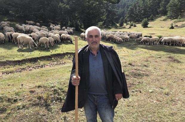 10 yaşında başladığı çobanlık mesleğinde yarım asra yaklaştı