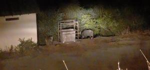 Ayı ve domuzlar bu mezbahaneyi mesken tuttu