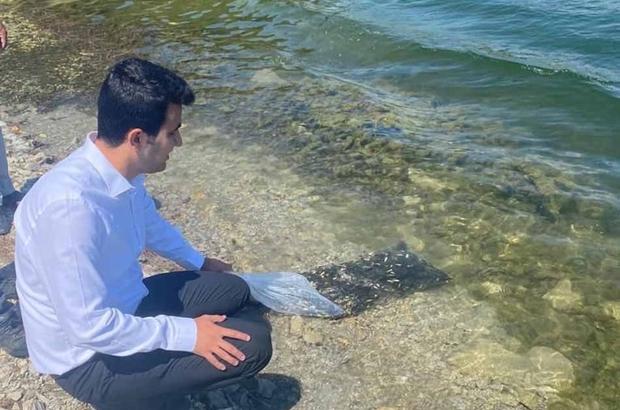 Pazarlar'daki göletlere 15 bin adet pullu sazan balığı yavrusu bırakıldı