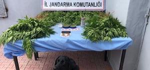 Tunceli'de uyuşturucu operasyonunda 1 gözaltı