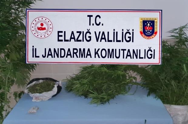 Elazığ'da jandarmadan zehir tacirlerine eş zamanlı operasyon