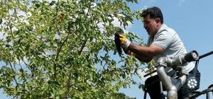 Bingöl'de ayağı ağaç dalına takılı kalan karga kurtarıldı