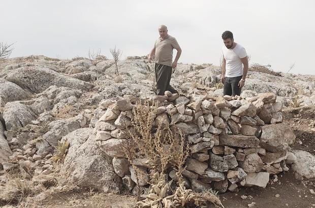 Yaban keçilerini yasadışı olarak avlamak için kurulan evsinler imha edildi