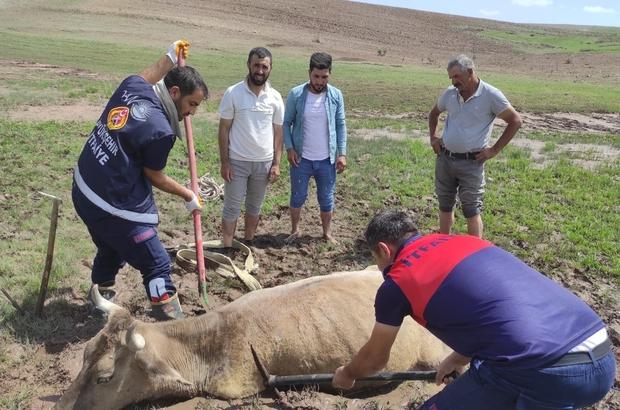 Özalp'ta çamura saplanan büyükbaş hayvan kurtarıldı