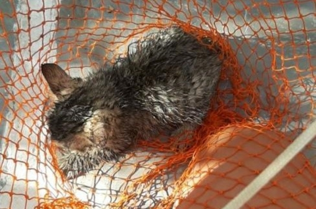 Su kuyusuna düşen yavru kedi kurtarıldı Yavru kedinin imdadına arama kurtarma gönüllüleri yetişti